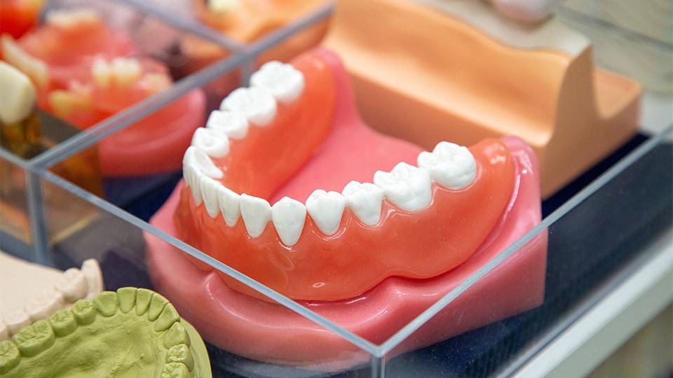 歯についての知識が豊富